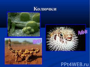 Колючки