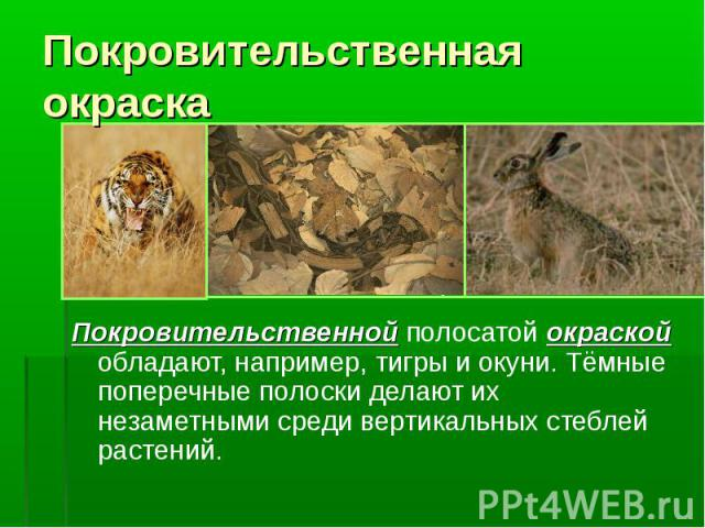 Покровительственная окраскаПокровительственной полосатой окраской обладают, например, тигры и окуни. Тёмные поперечные полоски делают их незаметными среди вертикальных стеблей растений.