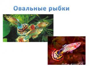 Овальные рыбки