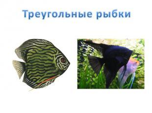 Треугольные рыбки