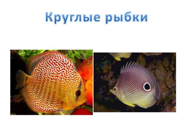 Круглые рыбки