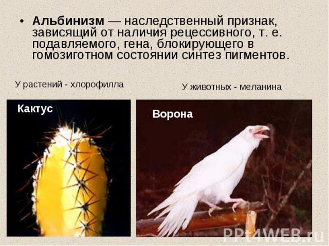 Альбинизм — наследственный признак, зависящий от наличия рецессивного, т. е. подавляемого, гена, блокирующего в гомозиготном состоянии синтез пигментов. У растений - хлорофиллаУ животных - меланина