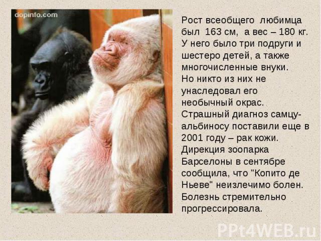 Рост всеобщего любимца был 163 см, а вес – 180 кг. У него было три подруги и шестеро детей, а также многочисленные внуки. Но никто из них не унаследовал его необычный окрас.Страшный диагноз самцу-альбиносу поставили еще в 2001 году – рак кожи. Дирек…
