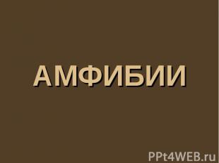 Амфибии