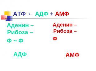 АТФ ← АДФ + АМФ Аденин – Рибоза – Ф ~ Ф Аденин – Рибоза – Ф