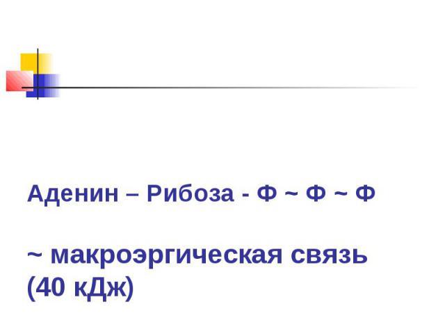 Аденин – Рибоза - Ф ~ Ф ~ Ф~ макроэргическая связь (40 кДж)