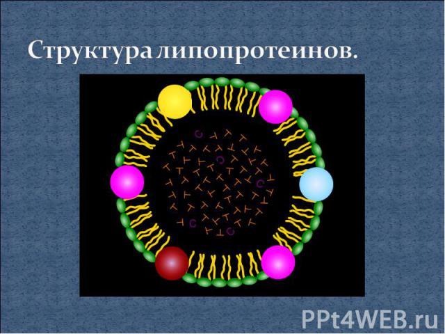 Структура липопротеинов.