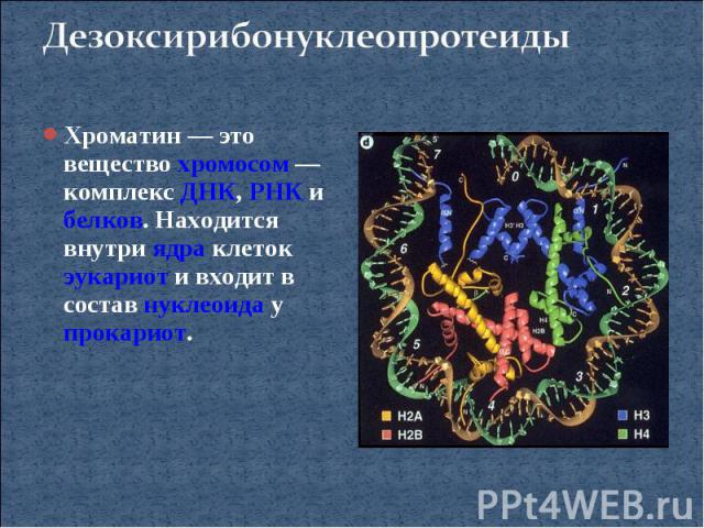 ДезоксирибонуклеопротеидыХроматин— это вещество хромосом— комплекс ДНК, РНК и белков. Находится внутри ядра клеток эукариот и входит в состав нуклеоида у прокариот.
