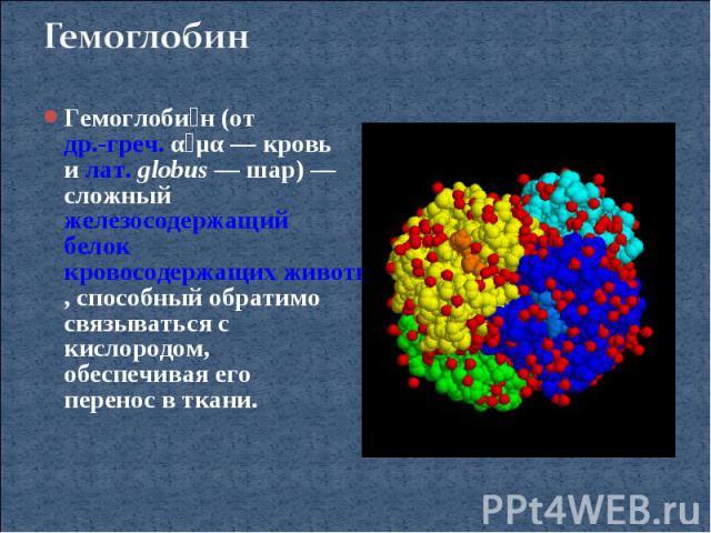 ГемоглобинГемоглобин (от др.-греч. αἷμα— кровь и лат.globus— шар)— сложный железосодержащий белок кровосодержащих животных, способный обратимо связываться с кислородом, обеспечивая его перенос в ткани.