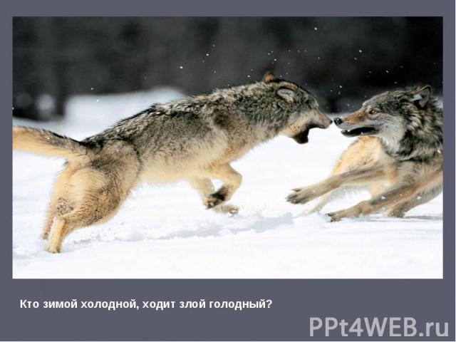 Кто зимой холодной, ходит злой голодный?