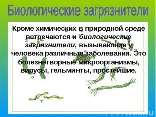 Биологические загрязнителиКроме химических в природной среде встречаются и биоло