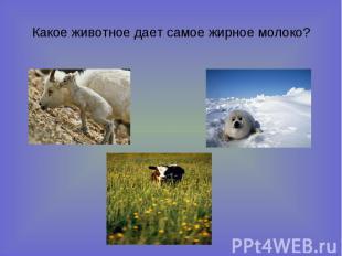 Какое животное дает самое жирное молоко?
