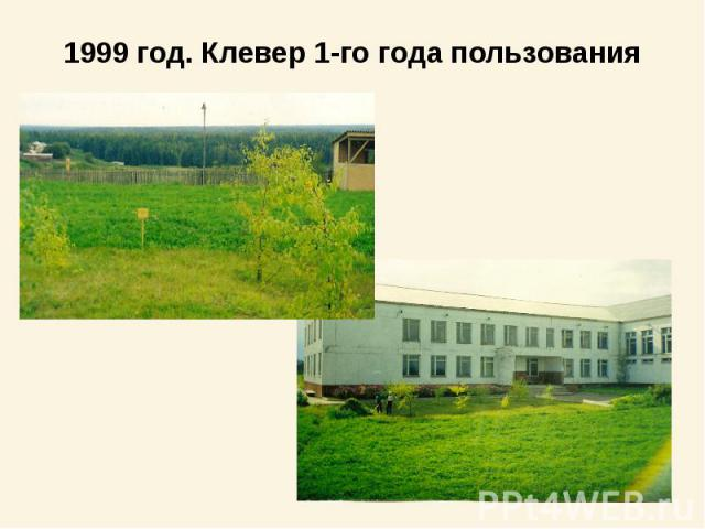 1999 год. Клевер 1-го года пользования
