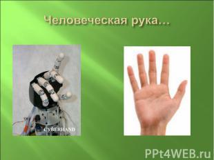 Человеческая рука…