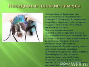 Невидимые плоские камерыСкопированные с фасеточных глаз насекомых плоские объект