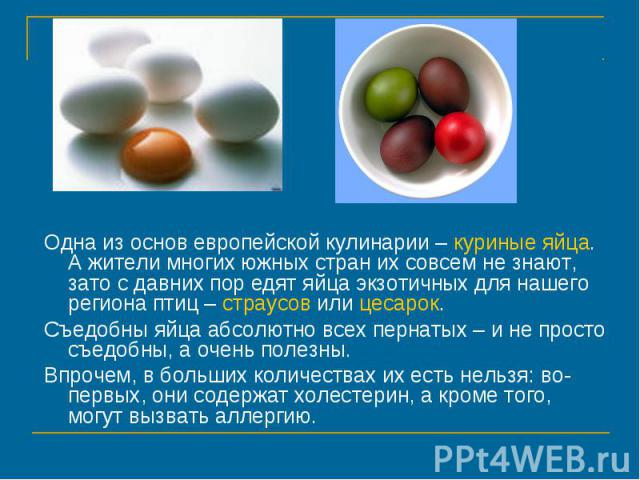 Одна из основ европейской кулинарии – куриные яйца. А жители многих южных стран их совсем не знают, зато с давних пор едят яйца экзотичных для нашего региона птиц – страусов или цесарок. Съедобны яйца абсолютно всех пернатых – и не просто съедобны, …