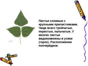 Листья сложные с крупными прилистниками. Чаще всего тройчатые, перистые, пальчат