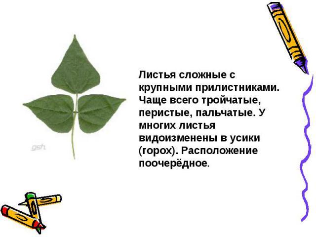 Листья сложные с крупными прилистниками. Чаще всего тройчатые, перистые, пальчатые. У многих листья видоизменены в усики (горох). Расположение поочерёдное.