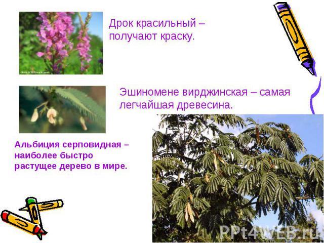 Дрок красильный – получают краску.Эшиномене вирджинская – самая легчайшая древесина.Альбиция серповидная – наиболее быстро растущее дерево в мире.