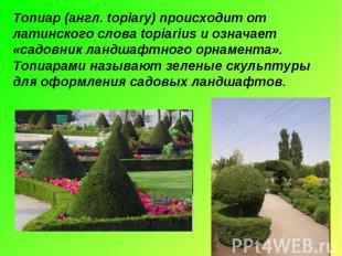 Топиар (англ. topiary) происходит от латинского слова topiarius и означает «садо