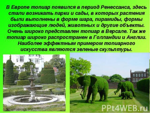 В Европе топиар появился в период Ренессанса, здесь стали возникать парки и сады, в которых растения были выполнены в форме шара, пирамиды, формы изображающие людей, животных и другие объекты. Очень широко представлен топиар в Версале. Так же топиар…