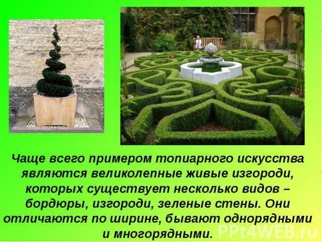 Чаще всего примером топиарного искусства являются великолепные живые изгороди, которых существует несколько видов – бордюры, изгороди, зеленые стены. Они отличаются по ширине, бывают однорядными и многорядными.