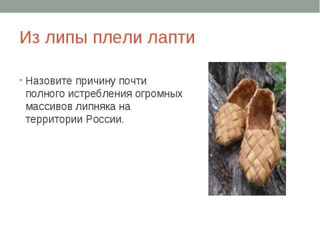 Из липы плели лаптиНазовите причину почти полного истребления огромных массивов липняка на территории России.