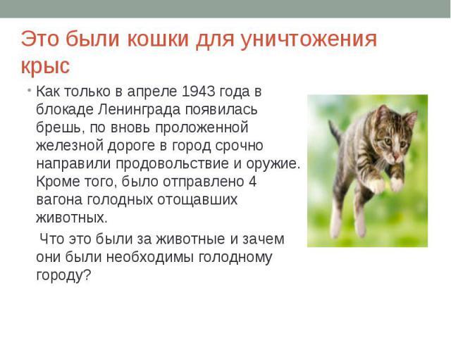 Это были кошки для уничтожения крысКак только в апреле 1943 года в блокаде Ленинграда появилась брешь, по вновь проложенной железной дороге в город срочно направили продовольствие и оружие. Кроме того, было отправлено 4 вагона голодных отощавших жив…