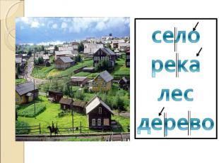 селорекалесдерево
