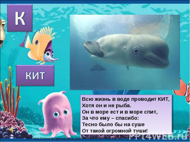 КИТ Всю жизнь в воде проводит КИТ,Хотя он и не рыба.Он в море ест и в море спит,За что ему – спасибо:Тесно было бы на сушеОт такой огромной туши!