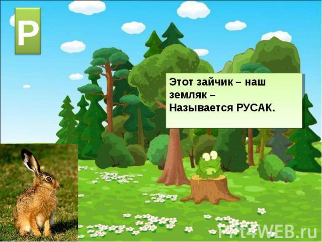 Этот зайчик – наш земляк –Называется РУСАК.