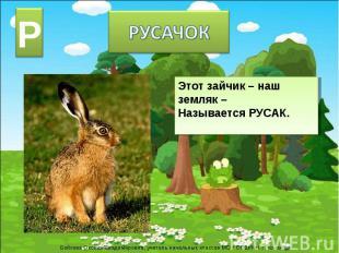 РУСАЧОК Этот зайчик – наш земляк –Называется РУСАК.
