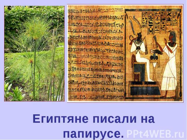 Египтяне писали на папирусе.