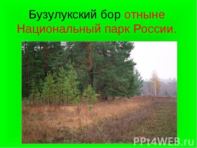 Бузулукский бор отныне Национальный парк России