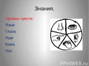 Знания.Органы чувств:Язык Глаза УшиКожаНос