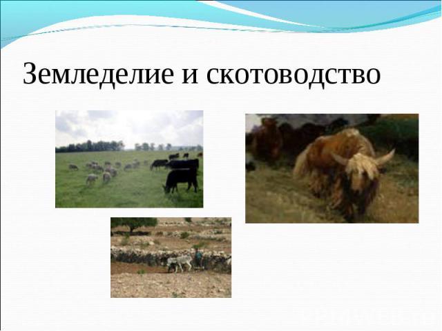 Земледелие и скотоводство