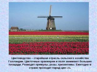 Цветоводство – старейшая отрасль сельского хозяйства Голландии. Цветочные оранже