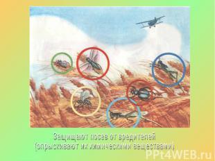 Защищают посев от вредителей (опрыскивают их химическими веществами)