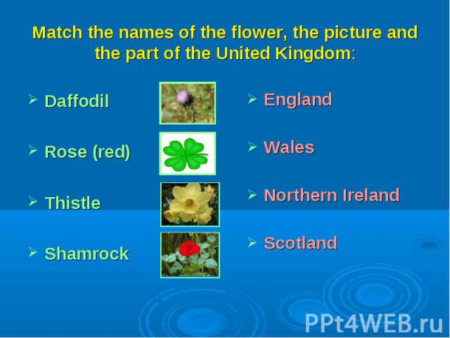 Match the names of the flower, the picture and the part of the United Kingdom:DaffodilRose (red)ThistleShamrockEnglandWalesNorthern IrelandScotland
