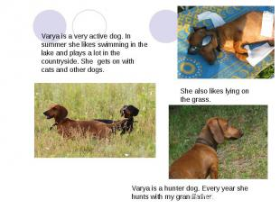 Varya is a very active dog. In summer she likes swimming in the lake and plays a