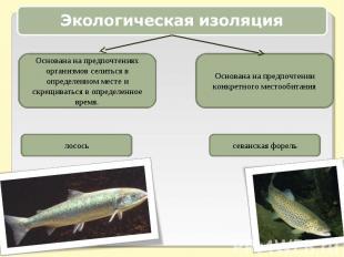 Экологическая изоляцияОснована на предпочтениях организмов селиться в определенн