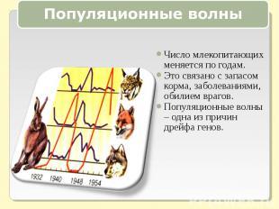 Популяционные волныЧисло млекопитающих меняется по годам.Это связано с запасом к