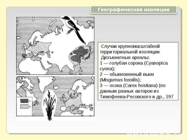 Географическая изоляция Случаи крупномасштабной территориальной изоляции Дизъюнктные ареалы: 1 — голубая сорока (Cyanopica cyona); 2 — обыкновенный вьюн (Misgurnus fossilis); 3 — осока (Carex hostiana) (по данным разных авторов из Тимофеева-Ресовско…