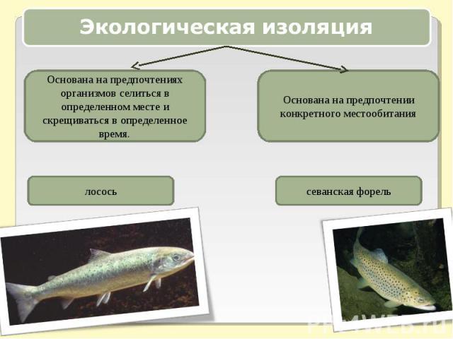 Экологическая изоляцияОснована на предпочтениях организмов селиться в определенном месте и скрещиваться в определенное время.Основана на предпочтении конкретного местообитания