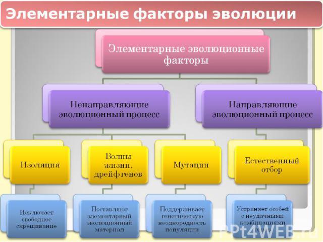 Элементарные факторы эволюцииЭлементарные эволюционные факторы