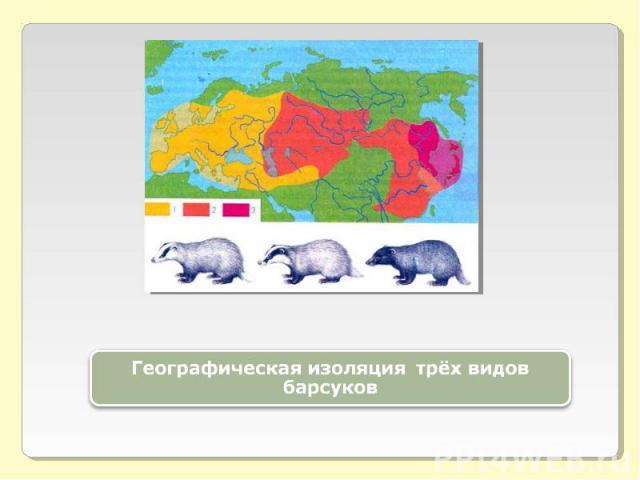 Географическая изоляция трёх видов барсуков