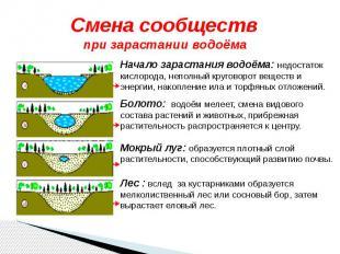 Смена сообществ при зарастании водоёма Начало зарастания водоёма: недостаток кис