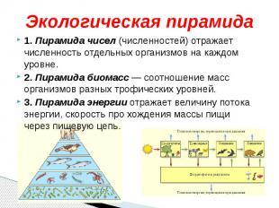 Экологическая пирамида1. Пирамида чисел (численностей) отражает численность отде