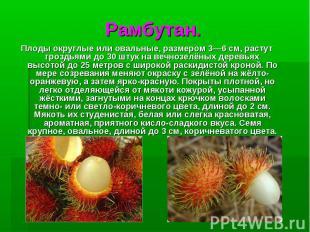 Рамбутан.Плодыокруглые или овальные, размером 3—6см, растут гроздьями до 30 шт