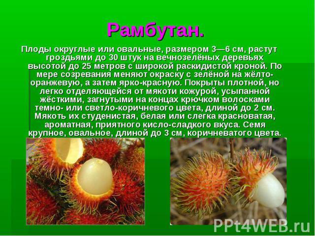 Рамбутан.Плодыокруглые или овальные, размером 3—6см, растут гроздьями до 30 штук на вечнозелёных деревьях высотой до 25 метров с широкой раскидистой кроной. По мере созревания меняют окраску с зелёной на жёлто-оранжевую, а затем ярко-красную. Покр…